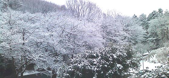 main_v_snow